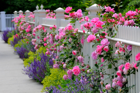 Cottage Style Garden Ideas a picket fence keeps animals out and frames the cottage garden perfectly Garden Fencing Ideas On Three Decorative Garden Fence Ideas Doityourself Com