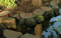 Garden Pond Borde...